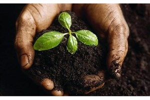 Mianeh IAU Researchers Produce and Commercialize Organic Bio-Fertilizer