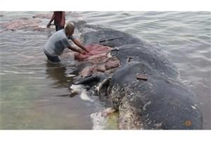 آلودگی پلاستیکی به عمیقترین نقاط اقیانوسها  و روده جانوران  رسید