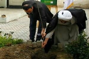 کاشت  نهال در حیاط معاونت جهاد سازندگی سازمان بسیج دانشجویی
