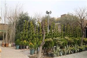 راهاندازی  نمایشگاه دائمی گل و گیاه  حوالی میدان راه آهن