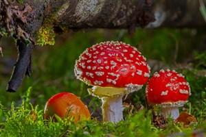 کشف مزیت های بیشتری از قارچ