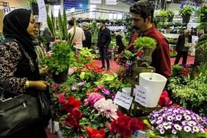 قیمت سنبل ۳ برابر شد/ نصف پیاز وارداتی سنبل گل نداد