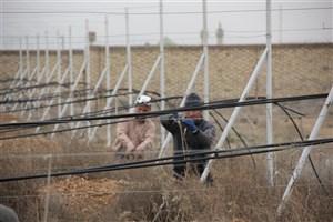 اقدام جهادی هرس نهالستان سه ساله انگور دانشگاه آزاد اسلامی تاکستان