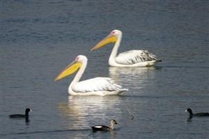 تاثیر تغییرات آب و هوایی روی پرندگان آمریکا