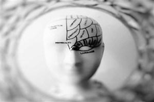 تفاوت میان مغز زن و مرد از دوران جنینی آغاز میشود