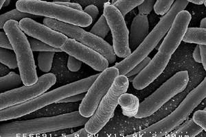 حرکت باکتریها در هوا تا هزاران کیلومتر دورتر