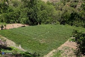 ۷۵۲ روستای مازندران درگیر سیل و برف شد