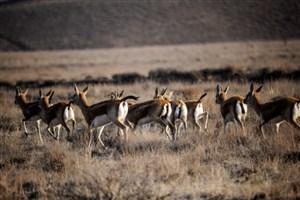 احتمالاً تلفات اخیر حیات وحش در پارک ملی بر اثر سرما بوده است