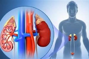 سلول های بنیادی و  درمان بیماران کلیوی