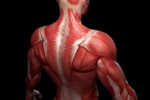 ایجاد دارویی برای جوان سازی سلول های عضلانی