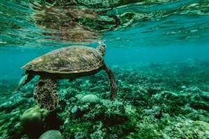 سال 2019 سالی تعیین کننده برای تنوع زیست دریایی اقیانوس ها