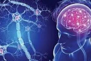 موفقیت پیوند سلول های بنیادی در 8 بیمار مبتلا به ام اس