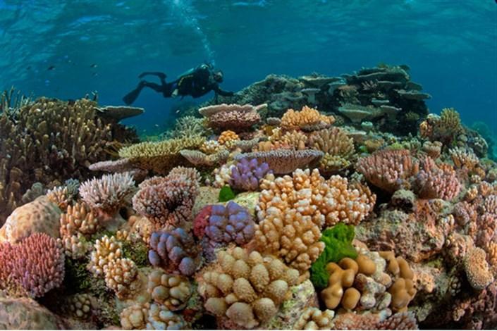 منابع مرجانی