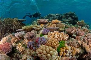 نقشه برداری از منابع مرجانی خلیج فارس