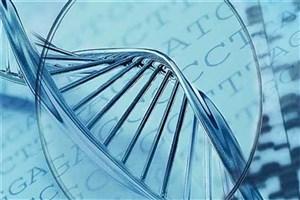 استانداردهای حفاظت از ذخائر ژنتیکی کشور ارتقا مییابد