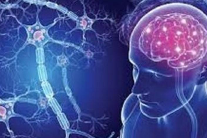 سلول های بنیادی مغزی