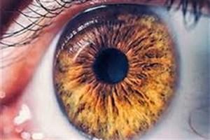 بازسازی چشم با استفاده از سلول های مشتق از فولیکول مو