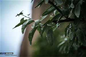 ورود اولین سامانه بارشی جدی به کشور ؛ روز چهارشنبه
