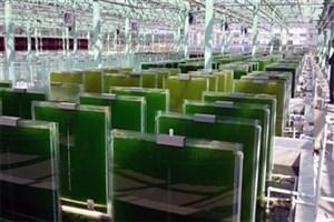 بازار 500میلیون دلاری صنعت جلبک در ایران