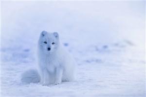 کاهش تنوع زیستی، تهدیدی برای انسان