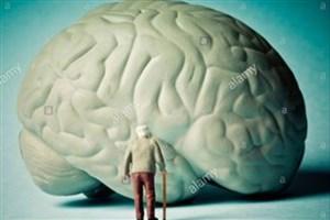 چگونه یک مغز با اندازه و ترکیب صحیح تولید کنیم