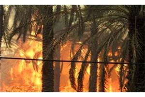آتش به جان  نخلستانهای سیاهوی بندرعباس افتاد/دسترسی به محل حادثه دشوار است