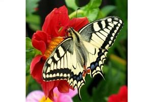 بررسی تغییرات آب و هوایی روی حشرات