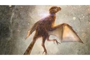 کشف گونه جدید دایناسور در چین
