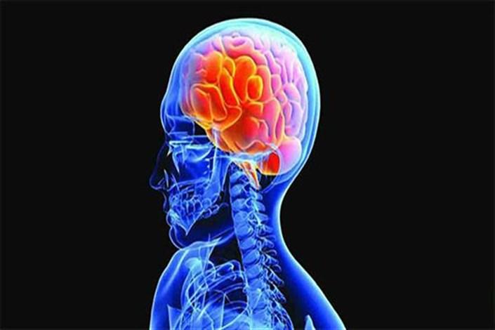 علوم شناختی شاخه های بزرگ دانش بشری را به هم متصل می کند