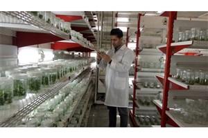 بهینه سازی و تکثیر سریع گیاه موسیر بومی (Allium stipitatum) از طریق کشت بافت