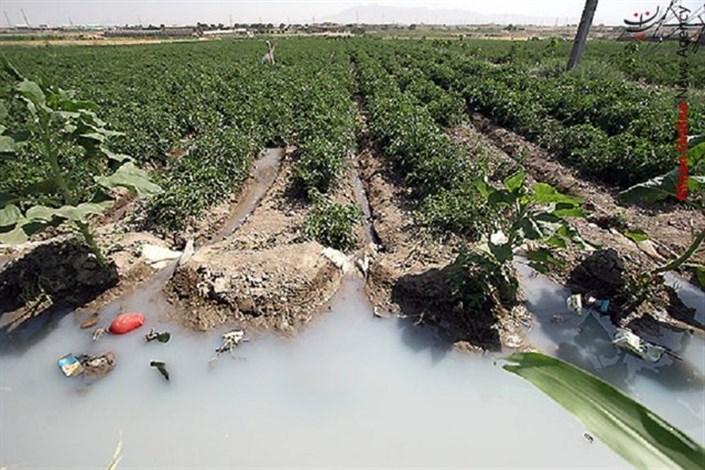 مقابله با کشت سبزیهای آلوده