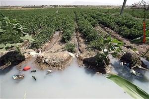 ورود مدعی العموم به موضوع مقابله با کشت سبزیهای آلوده
