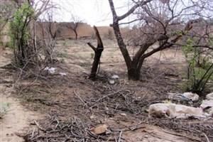 خشکسالی رمق کشاورزان را گرفته است