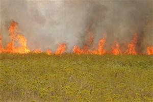 آتش سوزی در 9 هکتار از مزارع سیروان