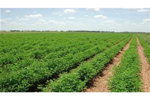 پشتیبانی از استارتآپ برای افزایش بهرهوری محصولات کشاورزی
