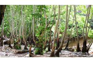 10 باغ و اماکن تفریحی متخلف در یاسوج پلمب شد