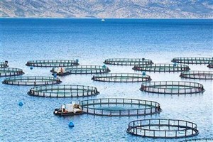 انتقال فناوری و بومی سازی طرح توسعه صنعت پرورش ماهی در قفس اجرایی میشود