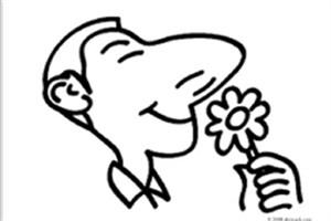 سلول درمانی درون بینی، بویایی را در موش ها احیا می کند