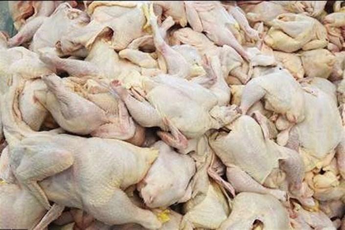 گوشت مرغ فاسد