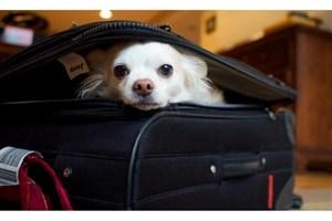 ورود حیوانات خانگی به تمامی هتلها و مراکز اقامتی ممنوع است/ گردشگری ایران حلال است