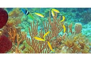 کشف راز ماهی هایی که  تغییر جنسیت می دهند