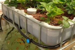 زارعی: پرورش ماهی و صیفیجات در مزارع واحد ورامین انجام میشود