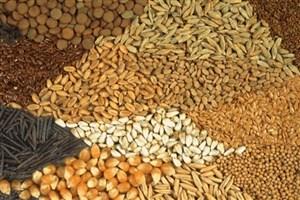 رسولی: اولویت کشاورزی واحد اردبیل در تولید بذر بومی و منطقهای است