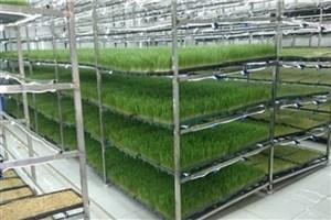 طباطبایی: علوفه و جوانههای خوراکی به روش هیدروپونیک در واحد یزد تولید میشود