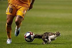 توقف مسابقات ورزشی در جهان به دلیل  حضور حیوانات