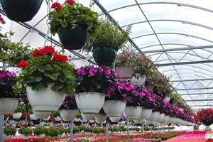 افزایش درآمدهای غیر شهریهای واحد قروه با تولید گل های زینتی و پرورش صیفی جات