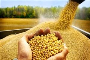 ماموریت واحدهای مختلف در کمیته ملی بذر دانشگاه آزاد اسلامی تعیین شده است/ تولید بذر گام مهمی در مقابله با تحریم