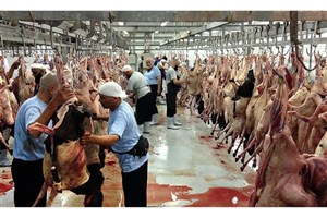 چرا گوشت قربانی حجاج ایرانی به کشور برنگشت؟