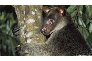 نصف شدن جمعیت گونه های جانوری