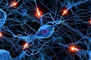 خدمات بیمه مبتنی بر فناوری سلول های بنیادی توسعه می یابد